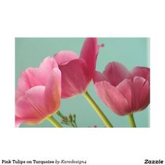 Pink Tulips on Turquoise Canvas Print