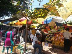 mangoes season