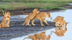 Morning drink by Marc MOL on 500px