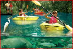 Can you imagine the memories made kayaking with your family here? See Manatee in the most natural, setting. It's worth the day trip from the Tampa area.  http://visitcitrus.com/ #VacationFlorida #Beachrentals #FamilyFun