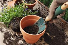 Basic gardening advice is available everywhere you look, but not all of it is right. Learn more from the authors of Decoding Gardening Advice.