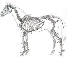 AnatomiaTopografica201 - IDENTIFICACION DE LAS REGIONES ANATOMICAS TOPOGRAFICAS