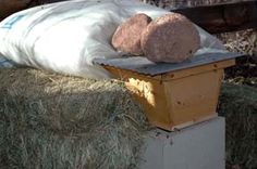 BackYardHive.com - Overwintering Bees with our Insulating Panels - Straw bales help protect the hive from winter winds but the straw bales also attract mice. So put a mouse guard on the front of your hive.