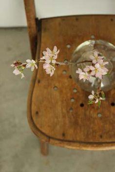 Masaki's diary Mar 2014 Bloom, Plants, Home Decor, Gardens, Flowers, Pretty, Decoration Home, Room Decor, Plant