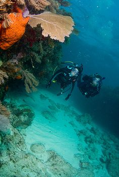 Scuba Diving (my next adventure) I can do it, yes I can :)