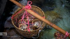 Natural cooking by Slon71 - Pinned by Mak Khalaf