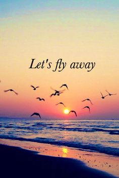 beach, beautiful, birds, dreams, feelings, fly, freedom, love, quote, quotes, sunset, wallpaper