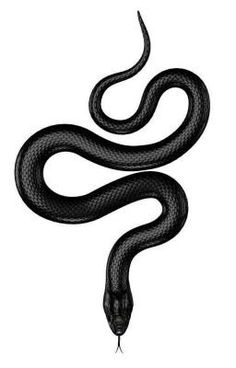 Figure of the Reptile - 50938478 - Black . Illustration of the reptile – 50938478 – Black snake. Black Snake Tattoo, Black Tattoos, Tattoo Sketches, Tattoo Drawings, Reptiles, Serotonin Tattoo, Ulzzang Girl Fashion, Equality Tattoos, Spiderbite Piercings