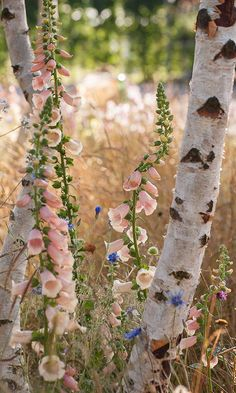 19 Easy Cottage Garden Foxglove Flower Combination Color – Vanchitecture - 19 Easy Cottage Garden Foxglove Flower Combination Color www. Garden Shrubs, Garden Plants, Garden Landscaping, Garden Shade, Herb Garden, Landscaping Ideas, Vegetable Garden, Amazing Gardens, Beautiful Gardens