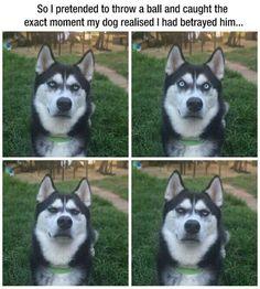 Husky face!!