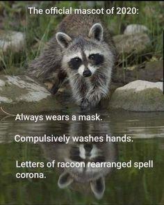 Really Funny Memes, Stupid Funny Memes, Funny Relatable Memes, Funny Stuff, Memes Humor, Funny Animal Memes, Funny Animals, Funny Signs, Frases