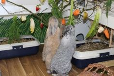 Hanging food up like this, keeps bunnies busy & promotes natural behaviour www.best4bunny.com