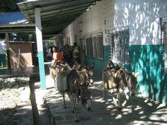 donkey trougt th hospital