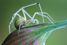 Animal Spider  Wallpaper