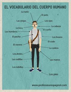 El vocabulario del cuerpo humano / Vocabulary for the human body - Great poster! #mfltwitterati #spanishteacher