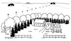 Energy-Efficient Windbreaks - Trees & Shrubs, Lawn & Garden - Page 2