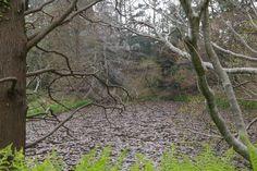 천리포 수목원 Chollipo Arboretum      http://en.wikipedia.org/wiki/Hanok    외국인 민병갈님이 심혈을 기울여 만들었다고 하는군요..멋진 장소입니다...1만4000여종의 수목이 있다고 하는군요...    천리포 수목원  http://www.chollipo.org/gnu/chollipo.html  페이스북   http://www.facebook.com/CLPArboretum  민병갈원장 동영상  http://youtu.be/JcZ5kV8mhXE    우리들한의원 무료앱 다운법 사상체질진단가능 free app. sasang diagnosis program.  http://www.iwooridul.com/app-update