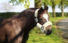 Kentucky Karvariimu Kentucky, Horses, Animals, Animales, Animaux, Animal, Animais, Horse