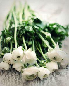 White ranunculus. #livinginstyle