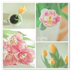 Spring Pastels by JoyHey, via Flickr