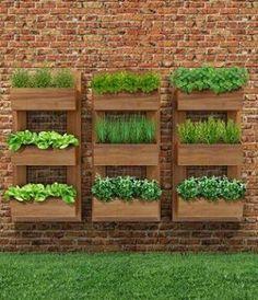 #farklitasarimlar#saksı#bahçe#peysaji#bitkiler#bitkiyetiştirme http://turkrazzi.com/ipost/1520510333935128105/?code=BUZ8Be7g44p