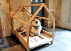 Pompom, the shop's shiba inu dog sits in his dog bed - paris