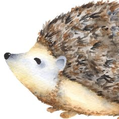 Watercolor hedgehog clipart, porcupine clipart, Forest animal clipart,... ($3) ❤ liked on Polyvore featuring animals