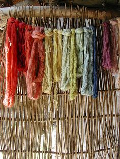 These are skeins of wool dyed using plants and methods known in the Iron Age in Britain, as part of an archaeological reconstruction. The period is roughly 50BC, about the time of Julius Caesar. If you go to the link you can see what plants, and what part of the plants, yielded these colors. Photo by small fry