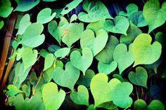 Love grows <3