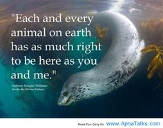Each & Every Animal Love Animal Quotes - Apna Talks. - I don't think this means you have to be a vegetarian or a member of PETA, it just means animals deserve kindness and respect as living creatures. Racing Extinction, Beautiful Creatures, Animals Beautiful, Hello Beautiful, Beautiful Life, Beautiful Things, Funny Animals, Cute Animals, Love For Animals Quotes