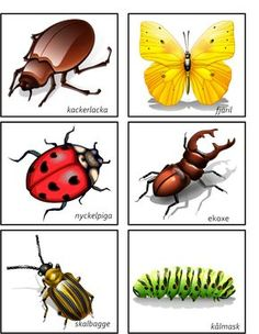 Body Preschool, Preschool Science, Educational Activities For Kids, Toddler Activities, Learn Swedish, Swedish Language, Insect Crafts, Spring Theme, Montessori Materials