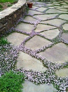 Flowering creeper around paving