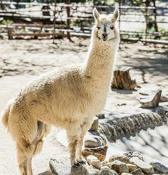 Rancho Las Lomas Wildlife Foundation. Photo by: Duke Burchell