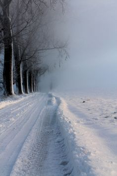 Winter Road...Gorgeous!