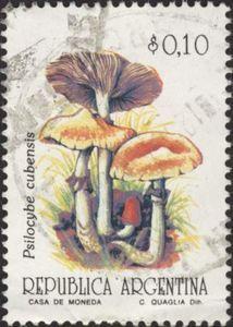 Mushrooms - Psilocybe cubensis