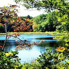 #Fall is on it's way to #NewEngland! #FranklinMA #Massachusetts #FranklinMass