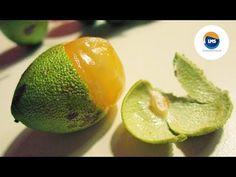 El Mamón ( fruta )