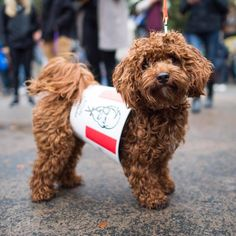 The Dogist: Tompkins Square Park Dog Halloween Parade - Dog Milk Halloween Parade, Dog Halloween, Dog Milk, Puppies, Park, Dogs, Photography, Animals, Style