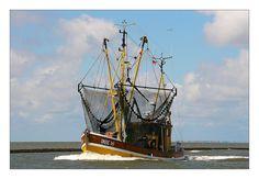 """Krabbenkutter """"ACC 16"""" bei der Einfahrt in den Hafen von Bensersiel.  Im Hintergrund ist Langeoog zu sehen."""