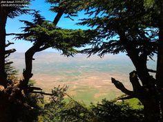 6 _ محمية بلزمة ( ولاية باتنة ) تضم سهل شاسع يتخلله واد و هضاب متفرقة تتميز بغطاء نباتي متنوع