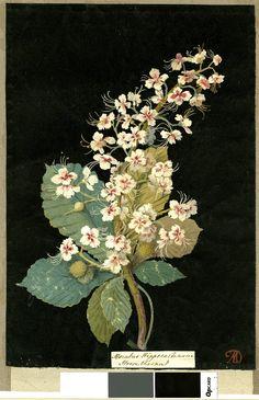 Mary Delany, р.1700г., коллаж