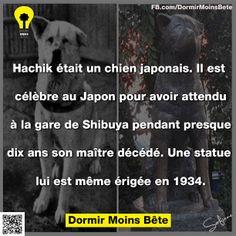 Hachik était un chien japonais, Il est célèbre au Japon pour avoir attendu à la gare de Shibuya pendant presque dix ans son maitre décédé. Une statue lui est même érigée en 1934.