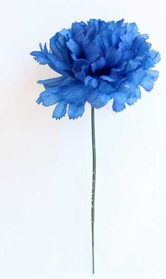 Most beautiful blue flower : Blue Carnation