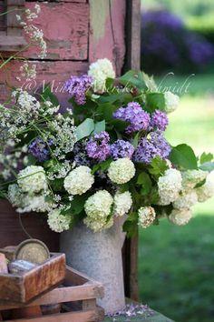 Lilacs & Viburnum...absolutely gorgeous....