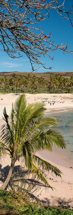 Beautiful Anakena Beach on Easter Island. The pink sand contrasts nicely with the turquoise water and blue sky - and there are Moai statues here too! Easter Island, Pink Sand, Turquoise Water, Just Do It, South America, Statues, Chile, Travel Destinations, Sky