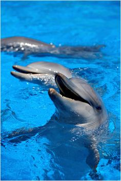 Play with the animals at Dolphin Marine Magic