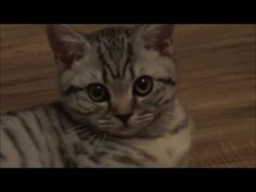 Cat video - Funny Cat fails and more - funny cat videos - http://positivelifemagazine.com/cat-video-funny-cat-fails-and-more-funny-cat-videos/ http://img.youtube.com/vi/62zPFVYNLp0/0.jpg  These funny cats and silly cats will make you laugh. Check out these funny cat videos. Funny Cats Funny Animals Funny Funny pranks funny videos Super funny … Judy Diet Programme ***Start your own website with USD3.9 per month*** Please follow and like us:  var addthis_config =