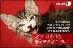 [펫카드]고양이 털 색깔과 성격의 상관관계