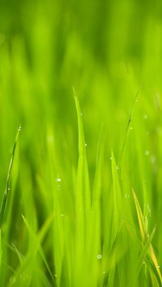 Close Up Photo of Green Grass Under Sunny Sky during Daytime · Free Stock Photo Orange Wallpaper, Nature Wallpaper, Iphone Wallpaper, Iphone Backgrounds, Flower Wallpaper, Apple Iphone, Iphone 6, Bokeh, Blooming Plants