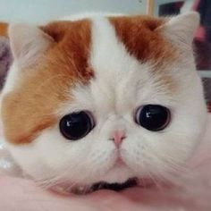 My favourite cat :33 . . . #Funny  #cute #little #kitten with big #head . . .